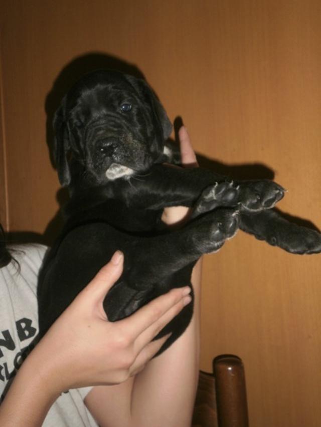 Foto VI cucciolo a 1mese PA274435_480x640.JPG