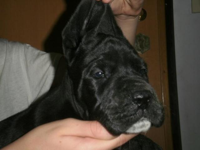 Foto VI cucciolo a 1mese PA274437_853x640.JPG
