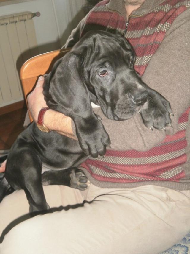 Foto I cucciolo a 3 mesi PC154418_480x640.JPG