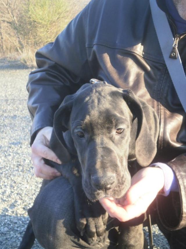 Foto II cucciolo a 3 mesi  P1024468_480x640.JPG